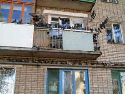 По 15 мешков комбикорма в месяц рассыпает на своем балконе и.