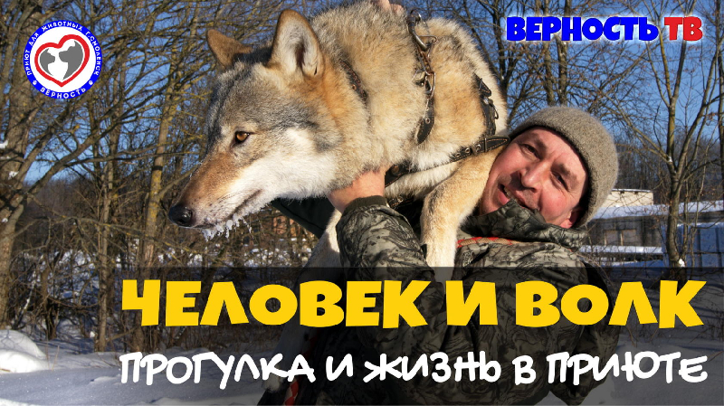 seks-v-priyute-video-milaya-devushka-blyuet-ot-glubokogo-mineta-porno-video-onlayn