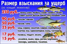 где нельзя ловить рыбу во время нереста