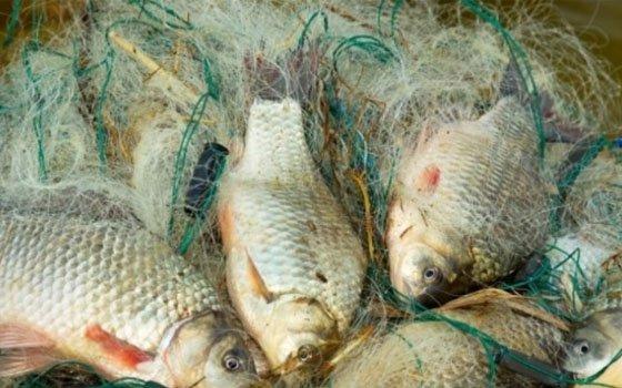 штрафы за ловлю рыбы в костроме