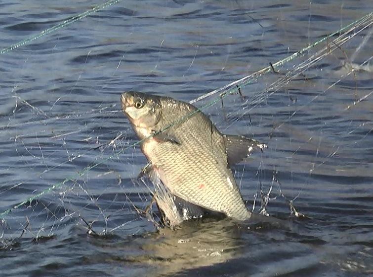 ловил рыбу ставил сеть