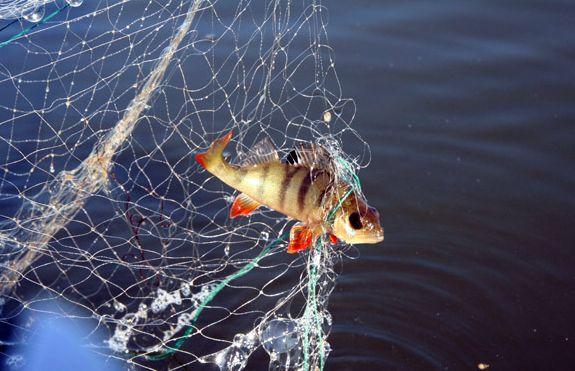 на какую рыболовную сеть ловить